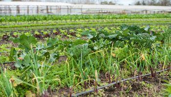 Senado impulsa la creación de un fondo para agricultura familiar