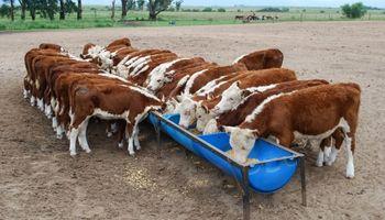 Argentina busca aumentar un 50 % las exportaciones de nutrición animal