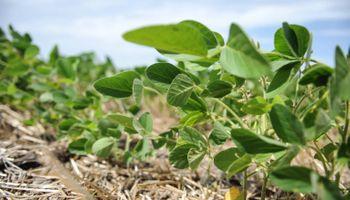 SustentHABILIDAD: tecnología, innovación genética y tendencias globales en soja