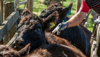 Tres campos de Buenos Aires están más cerca de exportar carne a la Unión Europea