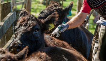 Santa Fe delineó estrategias sobre la sanidad y el bienestar animal
