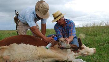 Senasa extiende hasta octubre el plazo para la revalidación de acreditaciones para veterinarios