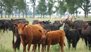 El Senasa detectó brotes de rabia paresiante en bovinos