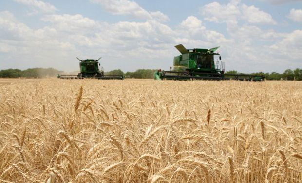 Con la cosecha de trigo avanzada, se estiman 3 millones de toneladas menos que en 2019