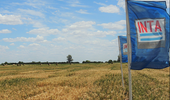 Trigo: las variedades que más rindieron de acuerdo a la red de ensayos de Santa Fe