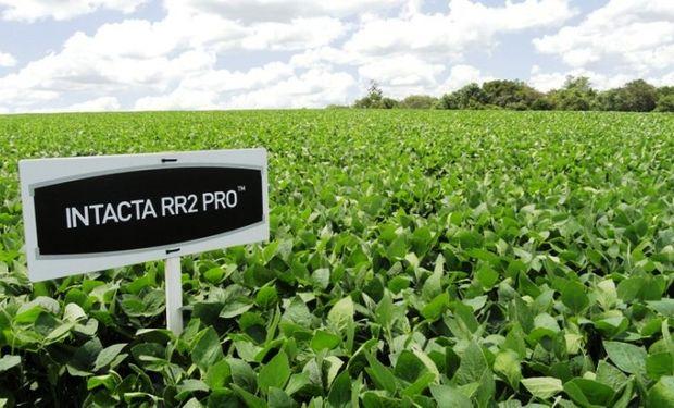 La denuncia es por los términos y condiciones impuestos por Monsanto para la adquisición y utilización de semillas con tecnología INTACTA.