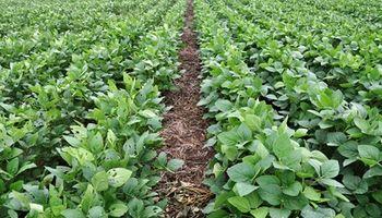 Brasil: la Justicia ordenó a Monsanto devolver regalías