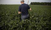 Soja y maíz, a la espera de un dato clave: qué factores influyen en la decisión de siembra de los productores en Estados Unidos
