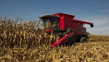 Maíz y trigo: cómo cubrirse frente al riesgo de mayor intervención del Gobierno