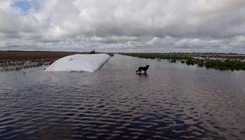Anticipan que el cambio climático tendrá impacto en la producción agropecuaria hacia 2070