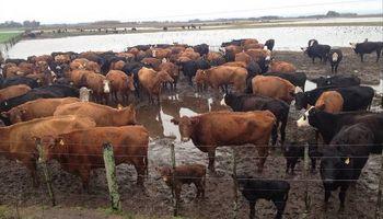 Consejos para cuidar el rodeo en los potreros inundados