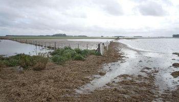 Más de un millón de hectáreas de trigo afectadas por inundaciones