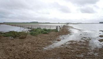 Adhesión a la Emergencia Agropecuaria para productores afectados