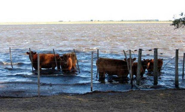 Inundaciones: denuncian que no se aplicaron a obras $ 1440 millones