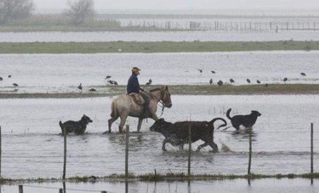 En ganadería las pérdidas serán por mortandad, ventas forzadas y pérdidas de pasturas. Foto: Santiago Hafford