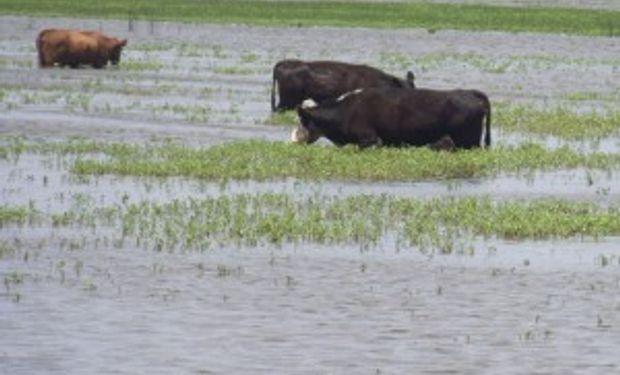 Destinarán $500 millones para ayudar a productores inundados