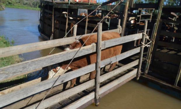 Los productores ya sacan el ganado de las islas por las crecidas de los ríos Paraná y Uruguay.