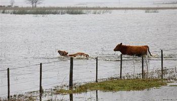 Un 60% de la producción lechera está hoy en regiones inundadas