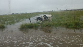 Postal repetida: productores inundados reclaman obras a Santa Fe