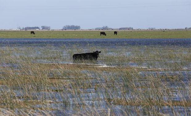 Inundaciones: bajó la oferta de ganado, pero esperan que no suba la carne. Foto: LA NACION / Mauro V. Rizzi.