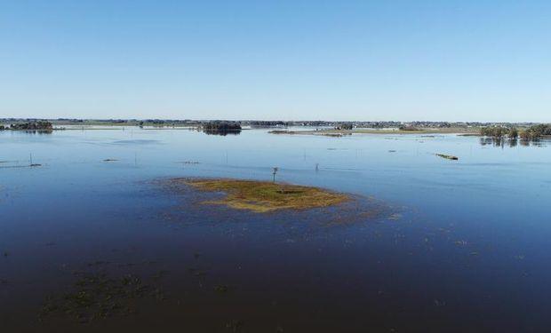 Nuevas lluvias complicaron aún más el estado de los lotes de trigo que se encuentran transitando etapas vegetativas.