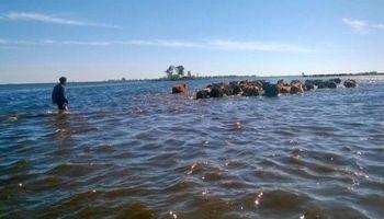Se recuperan las áreas productivas de General Villegas tras las inundaciones