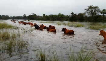 Sociedad Rural pide que el Estado subsidie tasa de un seguro agrícola
