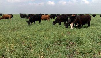 Por la sequía y el aumento de costos del feedlot, se espera una mayor oferta de animales