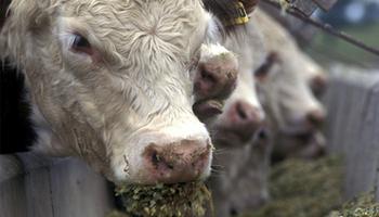 Inversión en ganadería, confiando en el mediano plazo