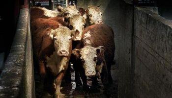 Ganadería: opciones para invertir en carne