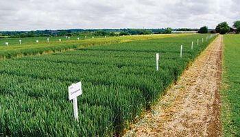 Cerealicultura de calidad, sustentable y reconocida