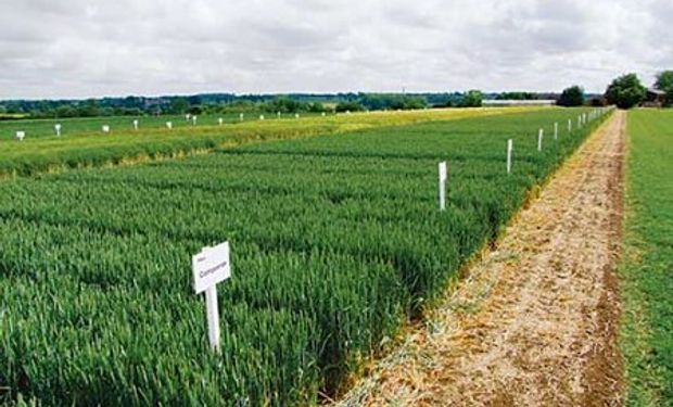 Emilio Satorre, Profesor Titular de Cerealicultura, repasó la labor en las tres áreas y destacó cómo se incorporó el concepto de sustentabilidad a todas sus actividades.