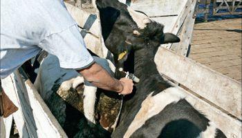 Tecnología que optimiza la gestión y los recursos para la producción bovina