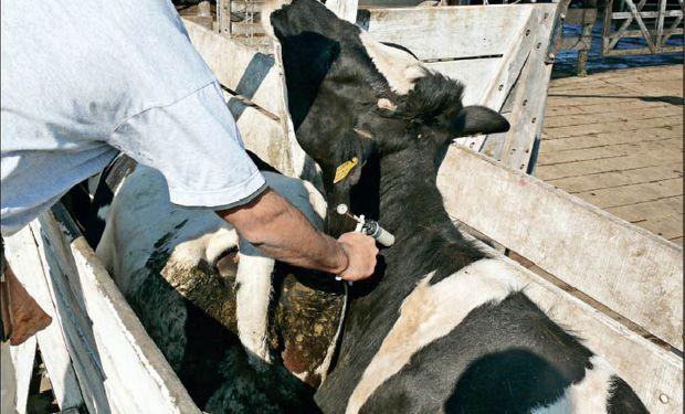 La tecnología sirve para ser aplicada tanto en animales como en seres humanos.