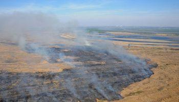 Tras los incendios en el Delta del Paraná, buscan recuperar el ecosistema con la implantación de árboles nativos