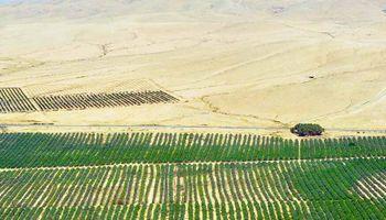 Sequía: la fórmula de Israel para cultivar en el desierto