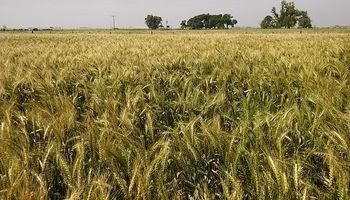 Con foco en el trigo, CREA lleva a cabo una nueva Jornada Agrícola