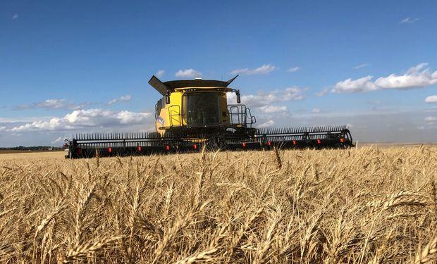 El trigo sale ganando en la cuarentena: los precios suben anticipando una mayor demanda