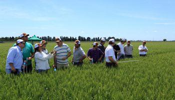 Resaltan los buenos resultados con Acadia Bio en soja y maíz