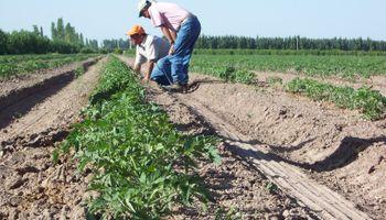 Uso responsable de fitosanitarios: jornada a campo