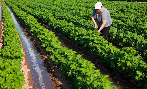 No están comprendidos en las disposiciones de esta ley los trabajos agrícolas y ganaderos, entre otros.