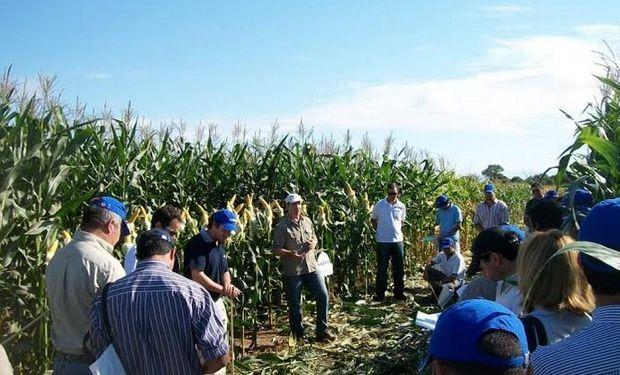 Importantes diferencias a favor de híbridos de maíz con tecnología Viptera 3.