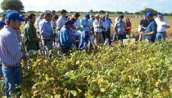 Maíz y soja: jornada a campo de Syngenta en el NOA