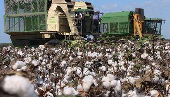El algodón gana terreno en Santa Fe y está arrojando muy buenos resultados en esta campaña
