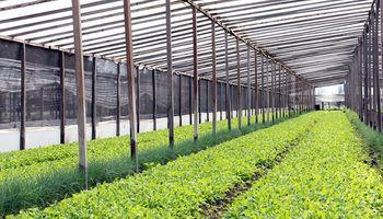 Kale: un superalimento que se cultiva hace más de 20 años