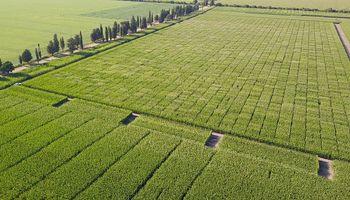 Manejo por ambientes, agricultura digital y uso de sensores serán los ejes del próximo webinar de KWS