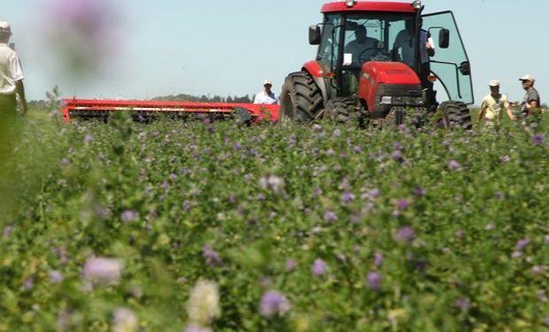 En la confección de heno el corte neto y sin desgarros es fundamental para lograr alta productividad de las pasturas
