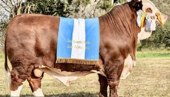 El Braford argentino, nuevamente en la cima del mundo