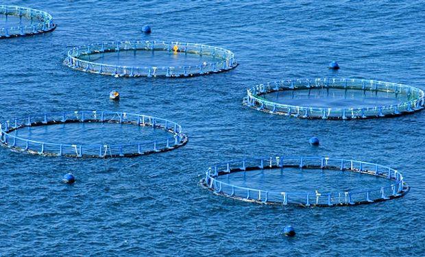 En 2025 se prevé que el consumo de pescado en Argentina descenderá 15.000 toneladas.