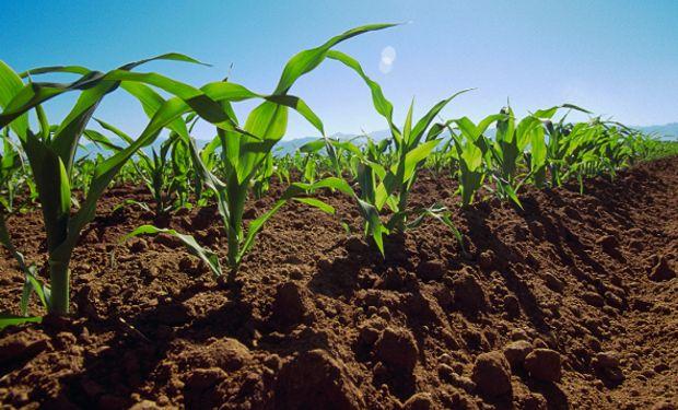 Agricultura sustentable: para jugar en el mismo equipo